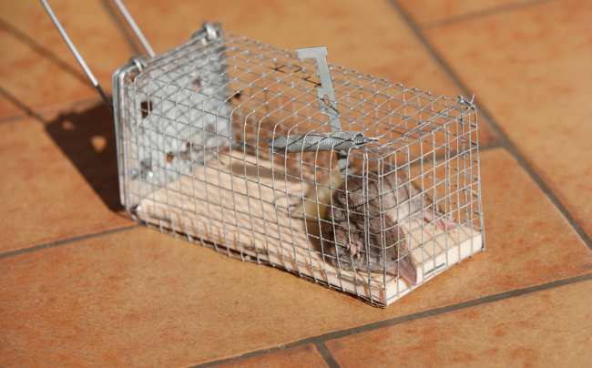 Fast Rodent Removal